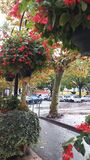 Färgglade träd i söder av Frankrike Arkivfoto