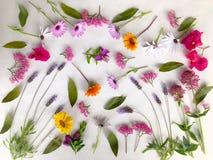 Färgglade vårblommor, naturlig säsongsbetonad bakgrund på vit arkivbild
