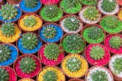 Färgglat av kaktuns i kruka arkivfoton