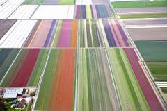 Färgglat blommafält från över royaltyfri fotografi
