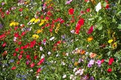Färgglat fält av lösa blommor Fotografering för Bildbyråer
