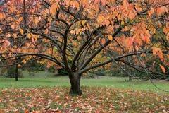 Färgglat höstträd Arkivbilder