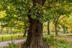 Färgglat när nedgång som kommer, höst i Central Park royaltyfri bild