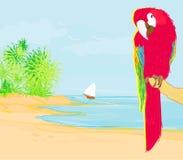Färgglat papegojafågelsammanträde på sittpinnen Royaltyfri Bild