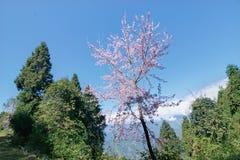 Färgglat träd av Sikkim Royaltyfri Fotografi