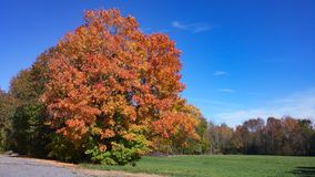 Färgglat träd i höst med det gröna fältet och blå himmel arkivfoton