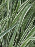 färgglatt gräs Arkivbild