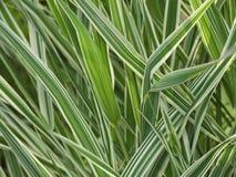 färgglatt gräs Royaltyfria Foton