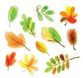 Färgillustration av höstsidor Royaltyfria Bilder