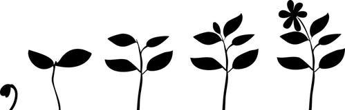färgillustrationen planterar silhouettes royaltyfri illustrationer