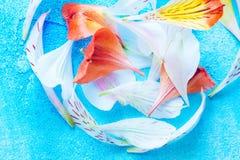 Färgkronblad på blå bakgrund Arkivfoto