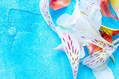 Färgkronblad på blå bakgrund Arkivfoton