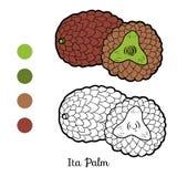 Färgläggningbok för barn: frukter och grönsaker (Ita Palm) vektor illustrationer