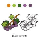 Färgläggningbok: frukter och grönsaker (svarta vinbär) Fotografering för Bildbyråer