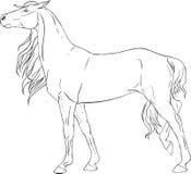Färgläggningbok med en häst Royaltyfri Bild