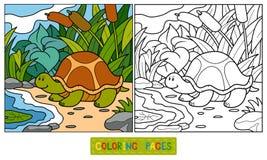 Färgläggningbok (sköldpaddan) royaltyfri illustrationer