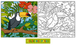 Färgläggningbok (tukan och bakgrund) Arkivbild