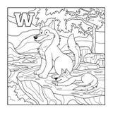 Färgläggningbok (vargen), akromatisk illustration (bokstav W) Royaltyfri Foto