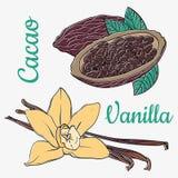 Färgläggningvaniljfröskidor eller pinnar och kakaohandteckningen skissar isolerat på vit bakgrund Arom för vaniljväxtblomma royaltyfri illustrationer