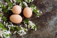 Färglösa easter ägg, det lyckliga easter begreppet med den vita våren blommar, retro easter bakgrund Royaltyfri Foto