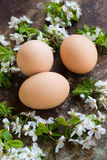 Färglösa naturliga easter ägg, det lyckliga easter begreppet med den vita våren blommar Royaltyfri Fotografi