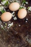 Färglösa naturliga easter ägg, det lyckliga easter begreppet med våren blommar, retro easter bakgrund Royaltyfri Fotografi