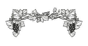 Färgpulver skissar av druvor vektor illustrationer