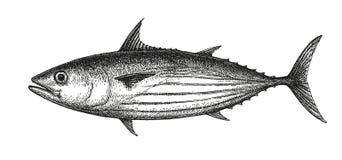Färgpulver skissar av hoppbaggetonfisk Arkivfoton