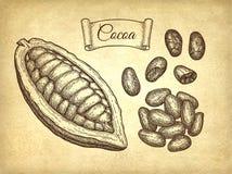 Färgpulver skissar av kakao Fotografering för Bildbyråer