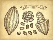 Färgpulver skissar av kakao Arkivfoto