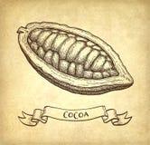 Färgpulver skissar av kakao Arkivfoton
