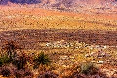 Färgrik öken med många Joshua Trees Arkivfoton