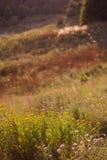 Färgrik örtartad äng för sommar med blommor gömma i handflatan waves för platssommarsun Arkivbild
