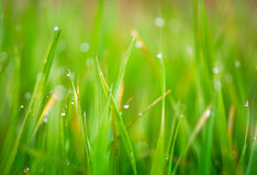 Färgrik abstrakt foto som är utmärkta för bakgrunder och kort Gräs Fotografering för Bildbyråer