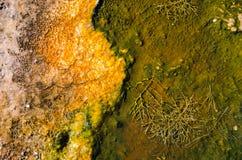 Färgrik, abstrakt naturlig modell i den Yellowstone nationalparken, Wyoming, USA Royaltyfri Fotografi