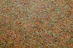 Färgrik abstrakt orange prickig bakgrund Fotografering för Bildbyråer