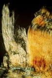 Färgrik, abstrakt vertikal micrograph av muskelfibrer i ett e Royaltyfria Foton