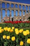 färgrik aquaduct Royaltyfri Foto