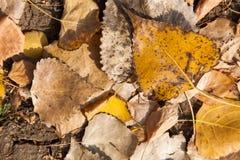 Färgrik backroundbild av stupade höstsidor som är perfekta för säsongsbetonat bruk royaltyfri fotografi