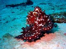 färgrik bläckfisk Fotografering för Bildbyråer