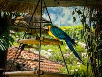 Färgrik blått-och-guling ara Arkivbilder