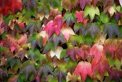 Färgrik bladmosaik - ett naturpussel arkivbild