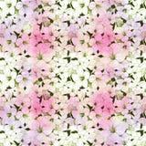 Färgrik blom- illustrerad bakgrund Arkivbild