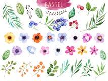 Färgrik blom- samling med mångfärgade blommor Royaltyfri Fotografi