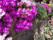 färgrik blomma Royaltyfria Bilder