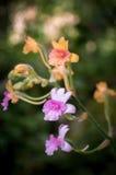 färgrik blomma royaltyfri fotografi