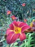 färgrik blomma Arkivfoton
