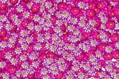 färgrik blomma för bakgrund Royaltyfri Foto