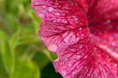 färgrik blomma för baner Arkivbild