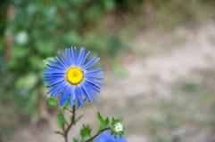 färgrik blomma för höst stock illustrationer